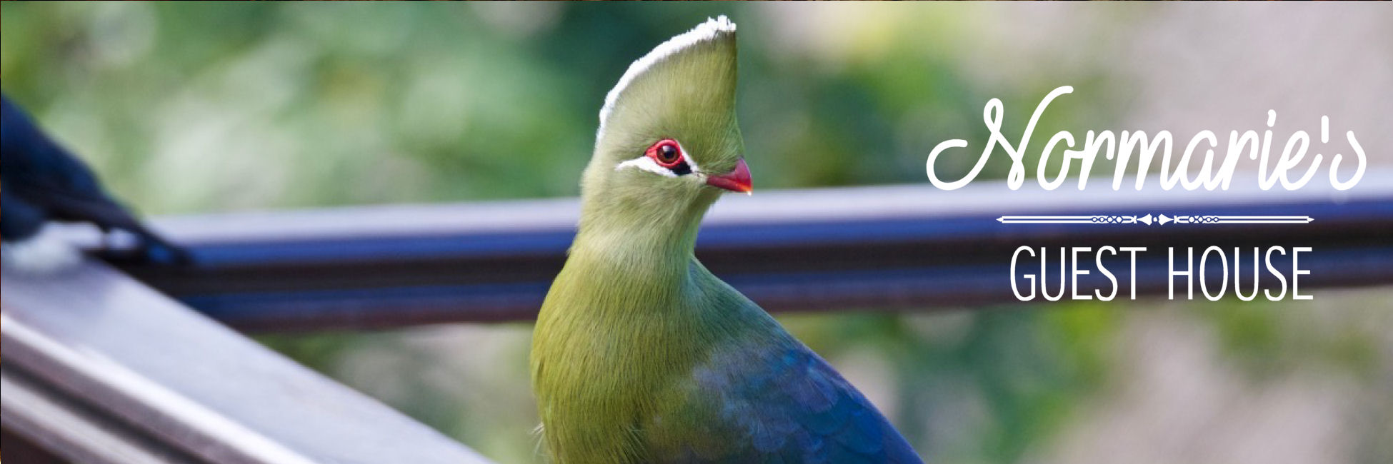 Normarie's Guest House Knysna Turaco